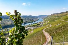 Sikter av vingårdarna längs Moselen, Tyskland royaltyfria bilder