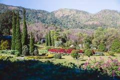 Sikter för berg för bakgrundsnatur naturliga Blommacerasoidesna Royaltyfri Bild