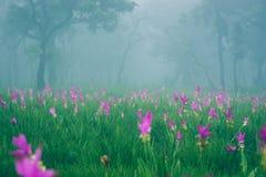 Sikter för berg för bakgrundsnatur naturliga Blommacerasoidesna Royaltyfria Bilder