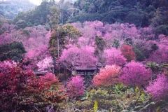 Sikter för berg för bakgrundsnatur naturliga Blommacerasoidesna Royaltyfria Foton