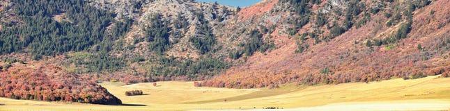 Sikter för landskap för askfläderkanjon, populärt som är bekanta som sardinkanjonen, nord av Brigham City inom de västra lutninga fotografering för bildbyråer