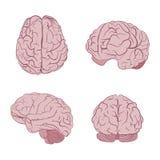Sikter för mänsklig hjärna fyra Överkant frontal, sida som är trekvarts- Plana hjärnvektorsymboler royaltyfri illustrationer