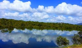 Sikter för reflexioner för ett konungtidvatten i mangrovar royaltyfri foto