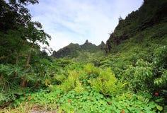 Sikter från Limahuli trädgårdar, Kauai ö Arkivbild