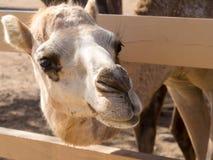 Sikter runt om Phillips Animal Sanctuary Arkivbilder