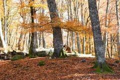 Siktsbokträdet parkerar i höst Royaltyfria Foton