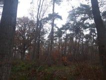 Siktsfönster i skog arkivbild