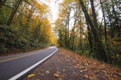 Silêncio da floresta do outono com a estrada ausente que parte Fotografia de Stock