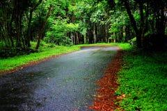 Silêncio road1 Imagem de Stock
