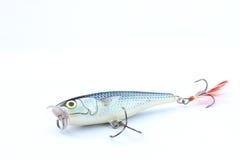 Sil ou petite amorce de poissons d'eau doux Images stock