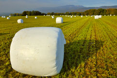Silage bales Stock Images
