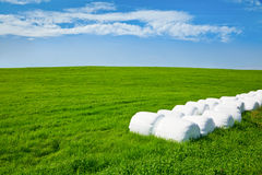 Silage bales on a field Royalty Free Stock Photos
