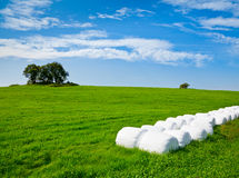 Silage bales on a field Royalty Free Stock Image