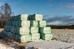 Silage bales on a field Royalty Free Stock Photo