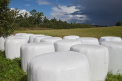Silage bales. Royalty Free Stock Image