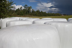 Silage bales. Stock Photography