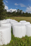 Silage bales. Stock Photo