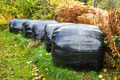 Silage Bales Stock Image