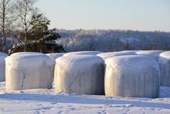 Silage Bales in Snow. Bales of silage stored by a field. Silage wrapped in plastic can be used as feed for ruminants (cattle or sheep) or biofuel. Photographed Stock Photo