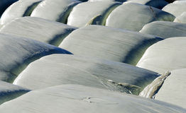 Silage bales wrapped up in foil #2 Royalty Free Stock Images