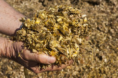 Silage Royalty Free Stock Photos