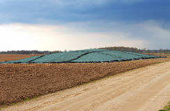 Silage food on a field. Stock Image