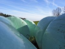 bales of silage wrapped in plastic film  Stock Image