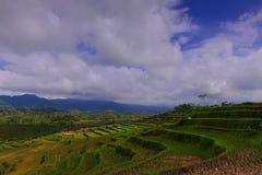 Silancur美妙的马格朗印度尼西亚花园  库存照片