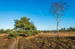 Silberne Birke im Vordergrund eines Naturreservats Stockbilder
