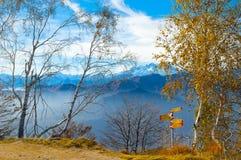Silberne Birken-Bäume Stockfoto