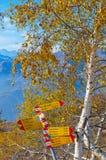 Silberne Birken-Baum Lizenzfreie Stockbilder
