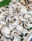 Silberne Pilze in einem Markt in Paris Frankreich stockfotos
