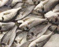 Silberne Seebrachsen für Verkauf Lizenzfreies Stockfoto