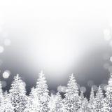Silberne Snowy-Bäume Lizenzfreie Stockbilder