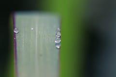Silberne Spinne Lizenzfreies Stockfoto