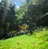 Silberne Spinne an einem sonnigen Tag am Park lizenzfreies stockfoto