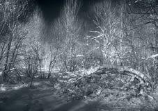 Silberner Winter Lizenzfreie Stockfotografie