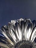 Silbernes flover stockfoto