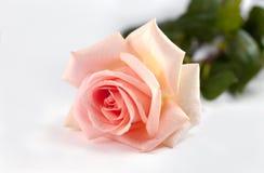 Silbido de bala Rose Imagenes de archivo