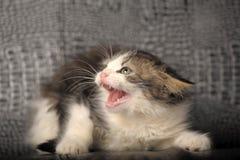 Silbidos del gatito imagen de archivo