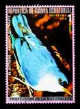 Silbidos di EL, serie nordamericano degli uccelli, circa 1976 Immagini Stock Libere da Diritti