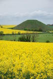 Silbury Hill, Wiltshire. A view across yellow fields to the prehistoric mound called Silbury Hill Royalty Free Stock Image