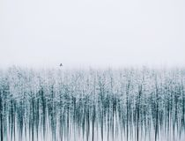 Silenc της φύσης Είναι μια καλλιτεχνική εικόνα για το χειμώνα Στοκ Εικόνες
