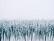 Silenc natura Ja jest artystycznym obrazkiem o zimie Obrazy Stock