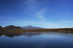 Silence. Asia blue fall kolyma lake larch magadan mountains ripples river silence sky water wood Stock Image