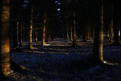 Silence in the forest at sunrise in February Royalty Free Stock Image