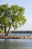 Silence lake Bench and tree. In a nice evening before sunset Royalty Free Stock Photo