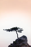 Silence - A Little Tree on a Little Rock Stock Photography