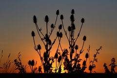 Silence. Plants silhouette against sunset. Village life Stock Photo