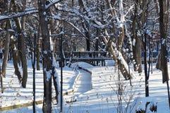 Silence in winter park. A winter scene of Kosta Khetagurov park, Vladikavkaz, North Ossetia-Alania, Russia. Stock Images